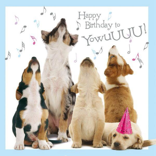 Birthday Wishes For Dogs-Happy Birthday Wishes From Dog To Owner